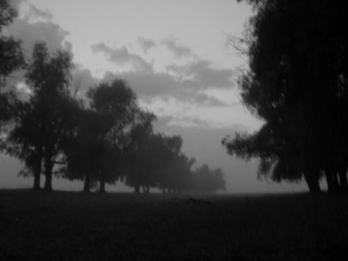 ивы в тумане