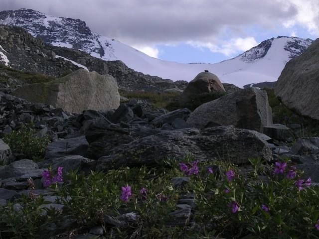 ледник Иолдо (снизу)