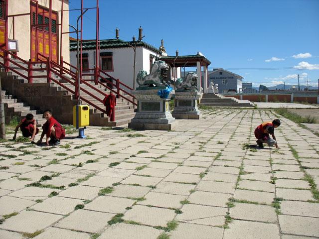 Мальчики-монахи выпалывают траву