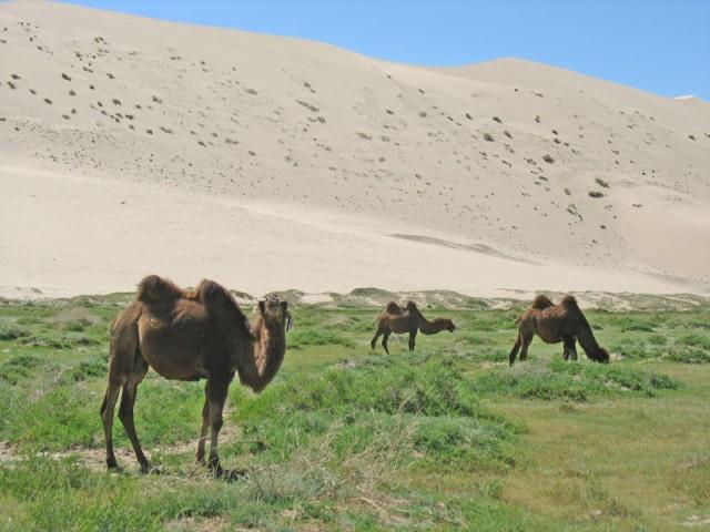 Монголия: Хонгорские Пески