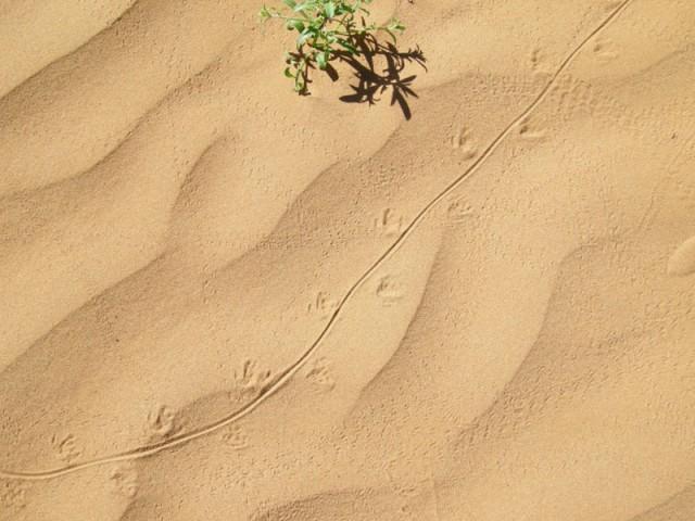 Монголия: Пустыня Гоби