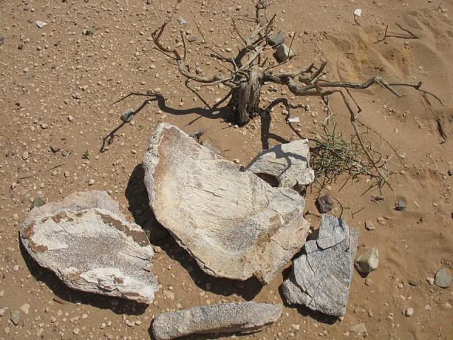 Окаменевшие куски дерева в Хермен-Цаве