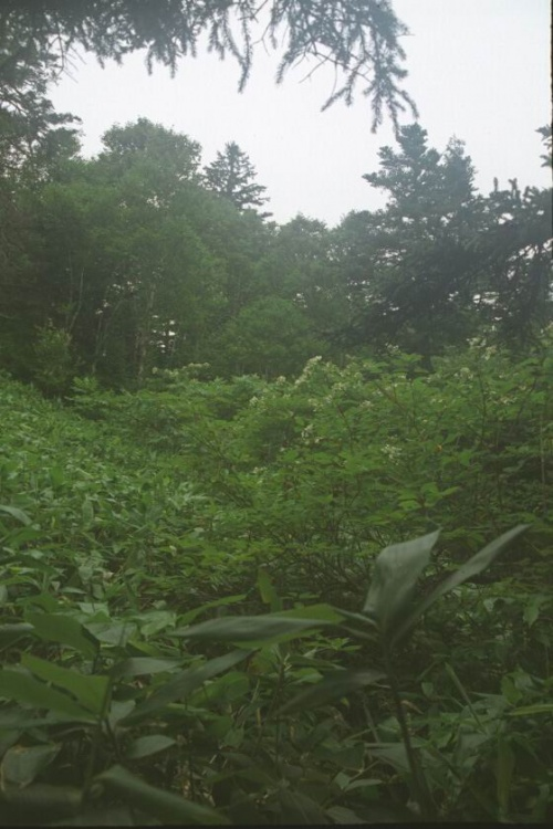 лес по дороге к берлоге