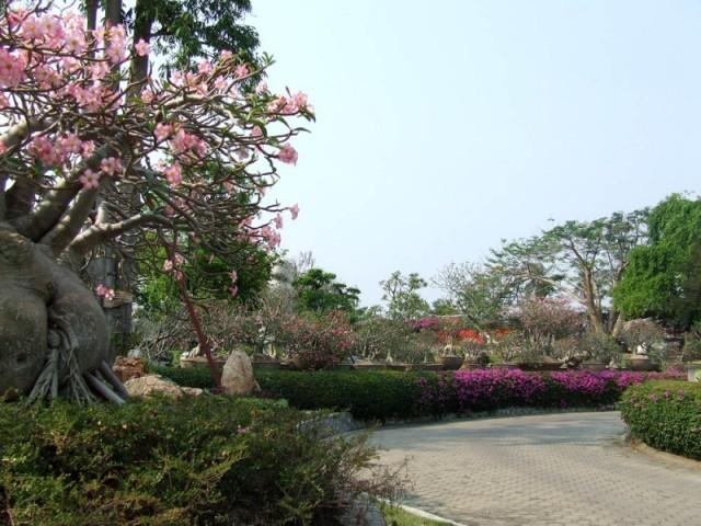 Сад. Паттайя