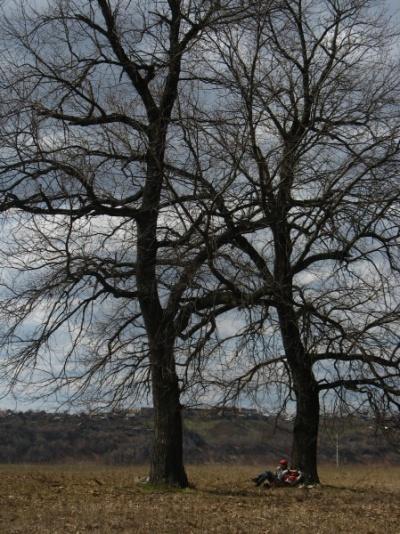 Под покровом дерев