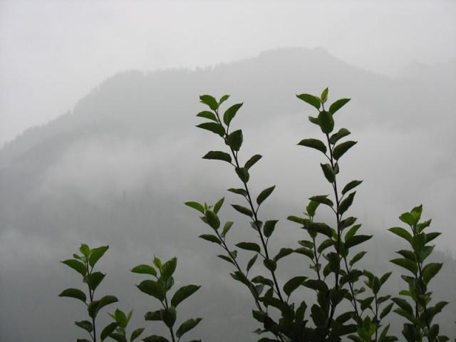 Горы, дождь, яблоня