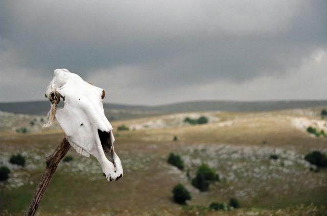 Лошадиный череп на одной из высот плато