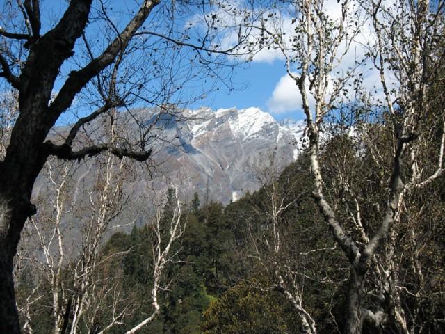 Гималайский лес