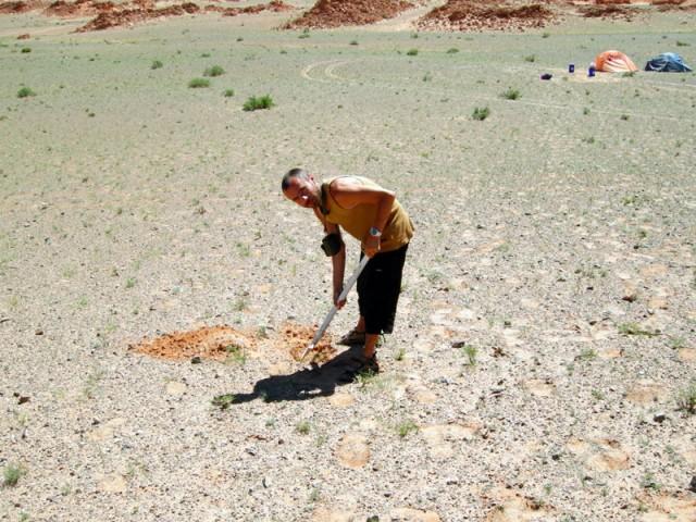 Муни закапывает арбузные корки в пустыне Гоби. Баянзаг, Монголия