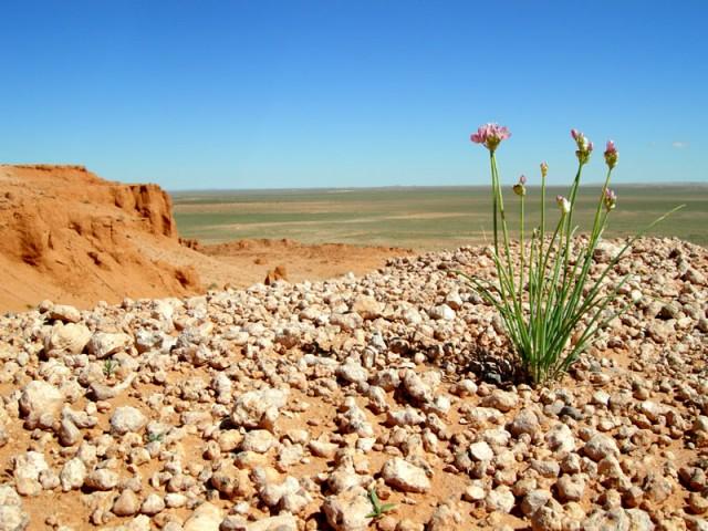 Даже маленькое растение здесь смотрится величественно, если посмотреть под особым углом