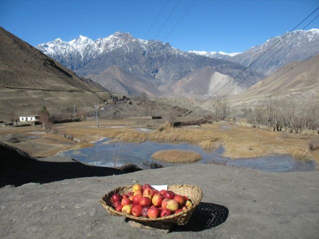 Яблоки Гималайские