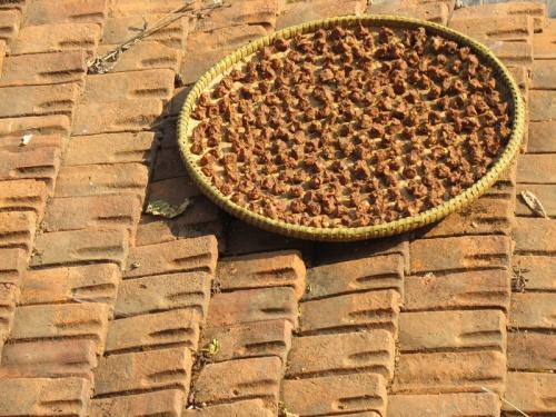 Мури на крыше