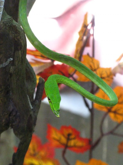 Найдите на этой фотографии змею
