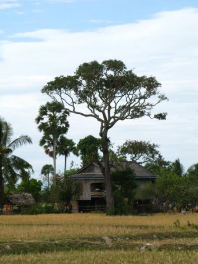 Пейзажи Камбоджи