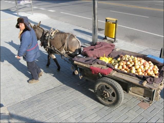 яблочки оптом недорого :)