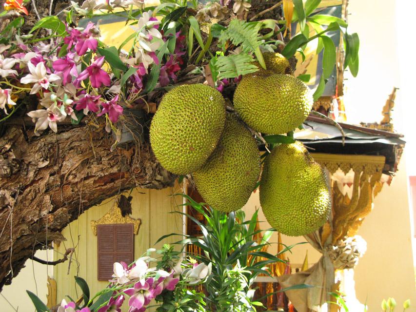 Хлебными деревьями называются деревья рода Artocarpus семейства