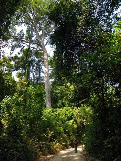 В зачарованном лесу Донг Натад
