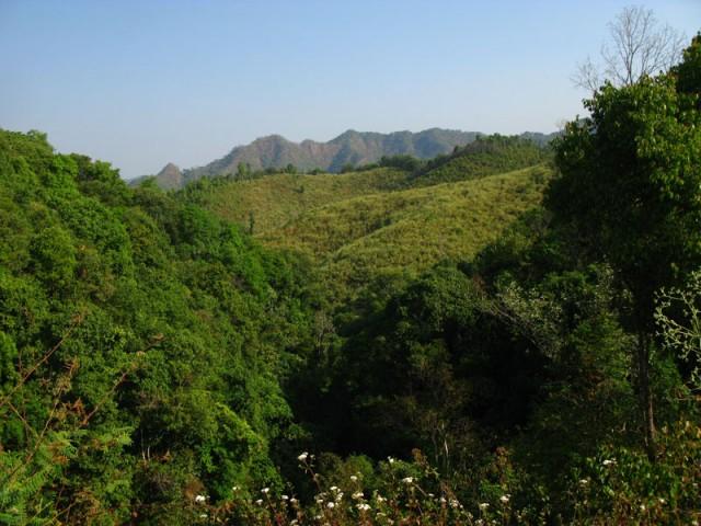 Леса Северного Тая...