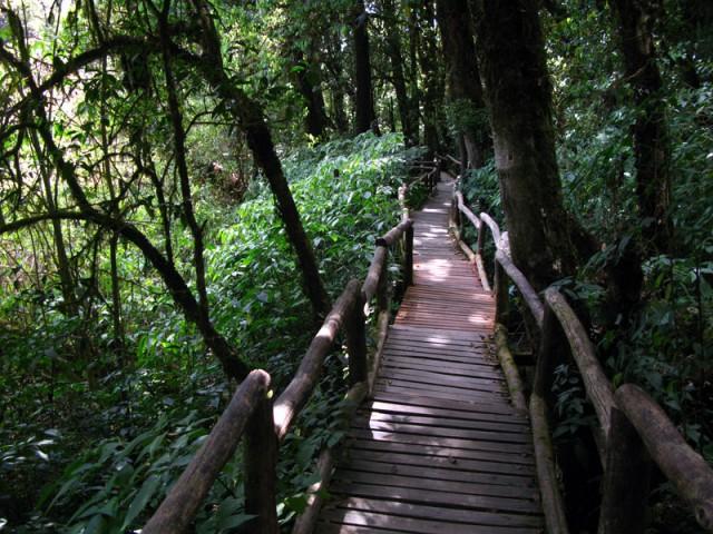 Тропинка в лесу на Дои Интанон