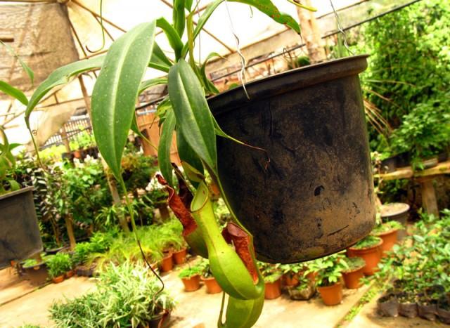 Так некоторые растения собирают воду