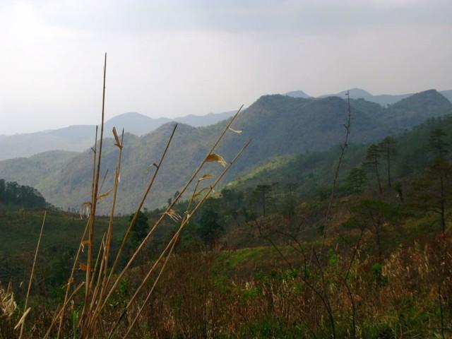 Налево посмотришь - лесистая Бирма