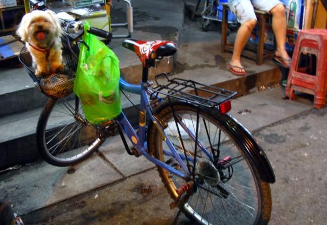 Велоболонка