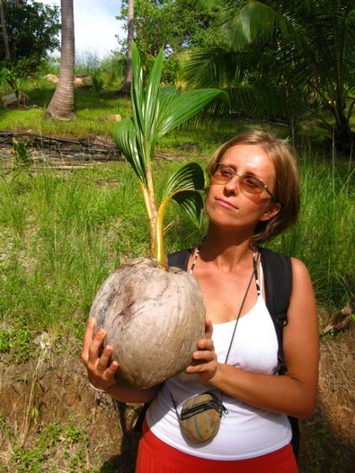 Росток кокоса