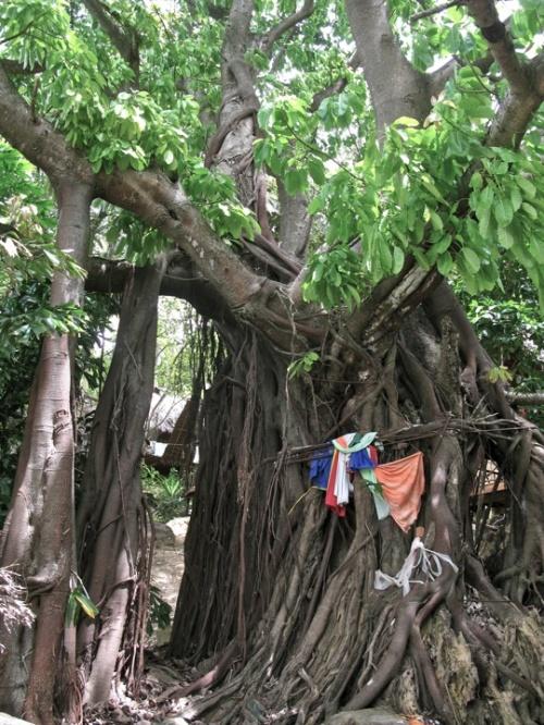 Свое мистическое дерево Боньян