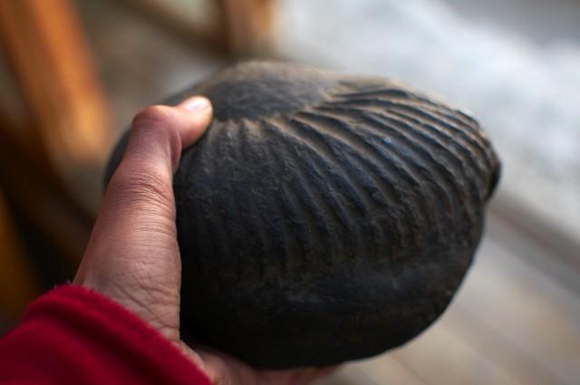Окаменевший моллюск