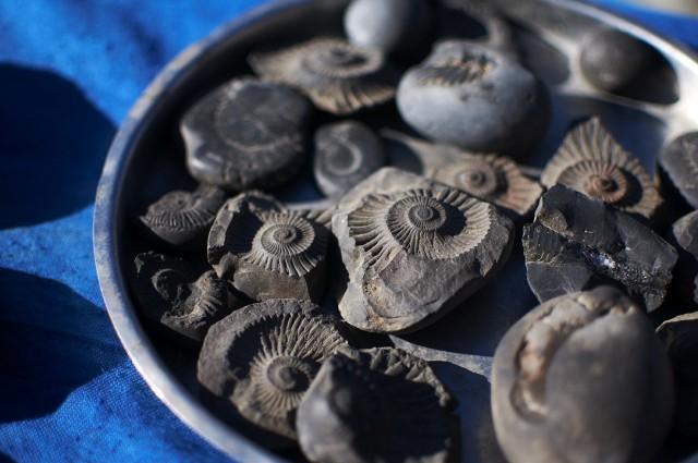 Окаменевшие моллюски