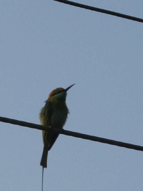 птичка на проводе