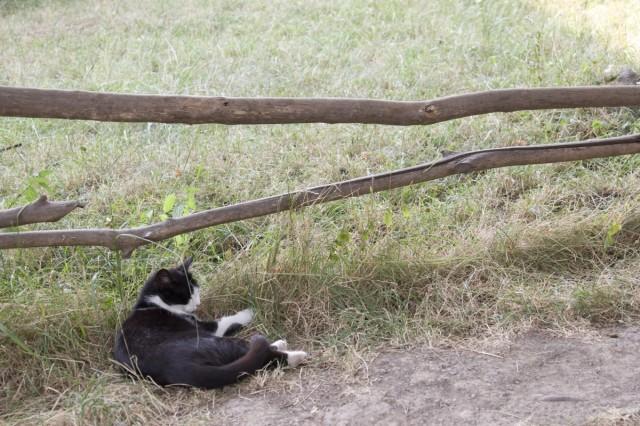 Кошко на отдыхе