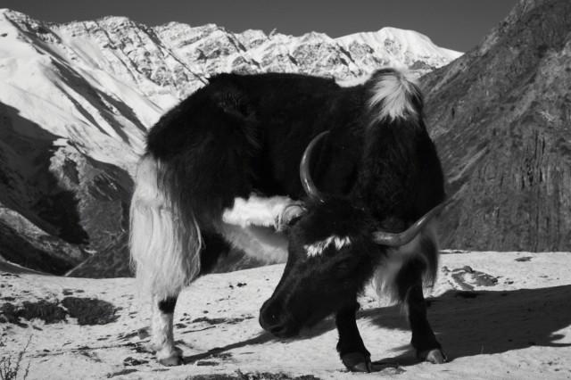 Непал №21