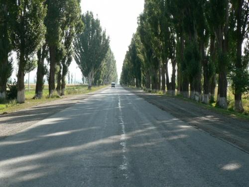 У меня в памяти Иссык-Кульские дороги всегда были вот такими - с побеленными деревьями в два ряда.