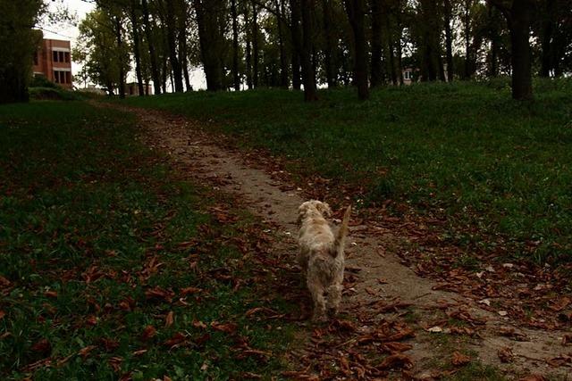 парк, где местные жительницы сами разбили цветник, и еще там выгуливают своих коз