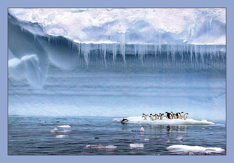 Скачать видео обитатели антарктиды фото 496-907