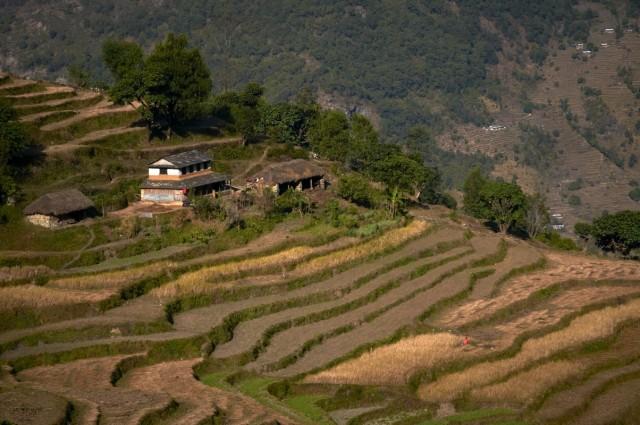 Непальская пастораль