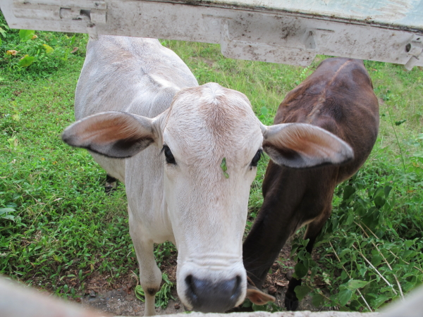 И не забудьте покормить отходами производства корову, заглядывающую в Ваше жилище! :)