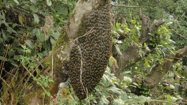 Пчелы - новый рой