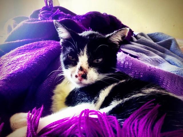 А там в одеялах Муся!