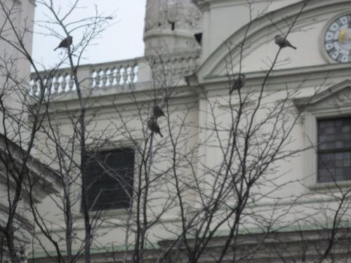 Церковь святого Карла. Птицам тоже холодно.