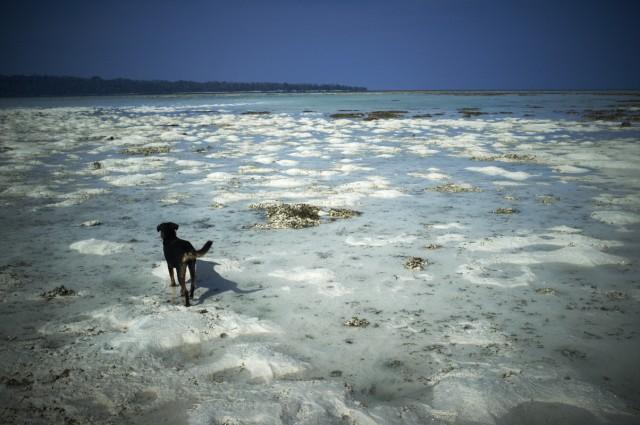 Остров Заброшенных Собак 10