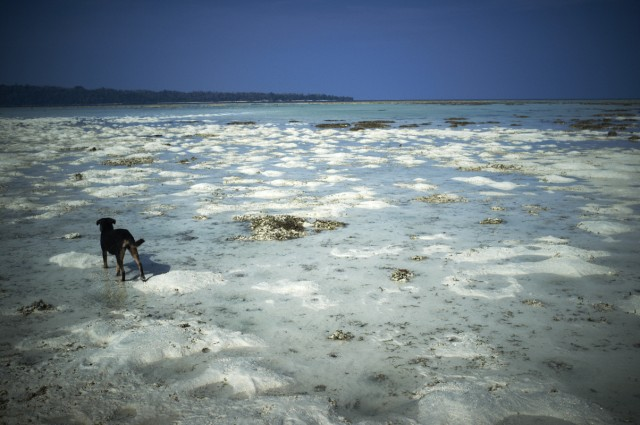 Остров Заброшенных Собак 11