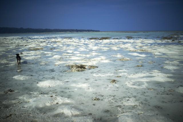 Остров Заброшенных Собак 12
