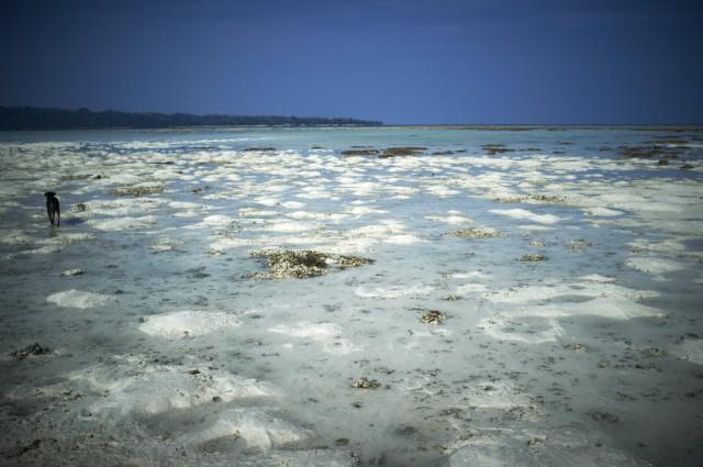 Остров Заброшенных Собак 13