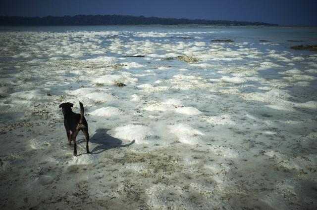 Остров Заброшенных Собак 15