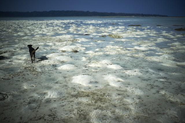 Остров Заброшенных Собак 16
