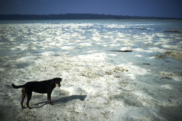 Остров Заброшенных Собак 17