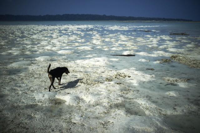 Остров Заброшенных Собак 18