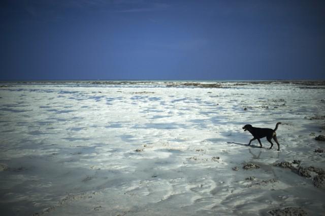 Остров Заброшенных Собак 3